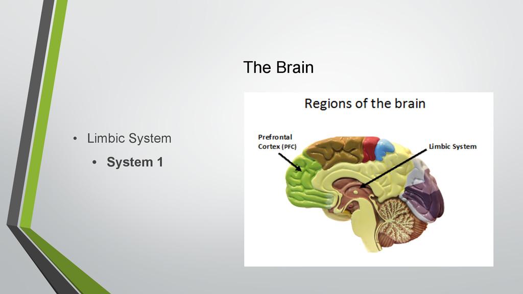 The Brain • Limbic System • System 1