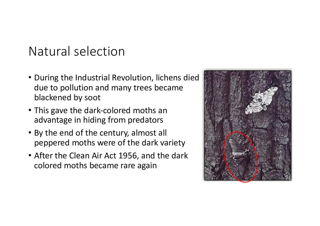 Natural selection • During the Industrial Revol...