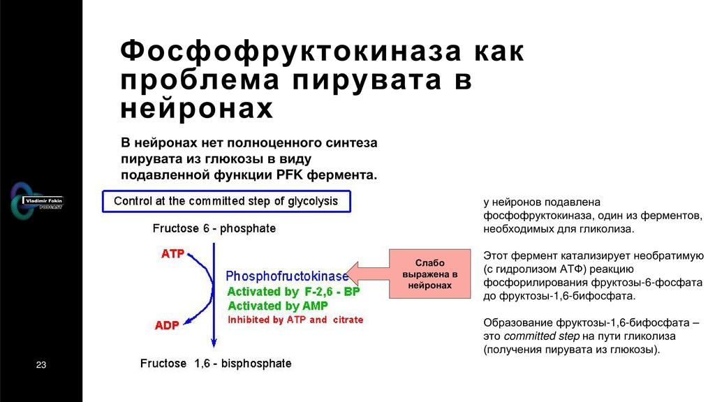 23 Фосфофруктокиназа как проблема пирувата в не...