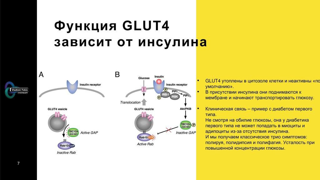 7 Функция GLUT4 зависит от инсулина • GLUT4 уто...