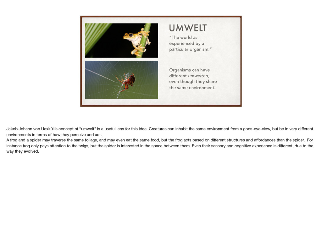 "UMWELT ""The world as experienced by a particula..."