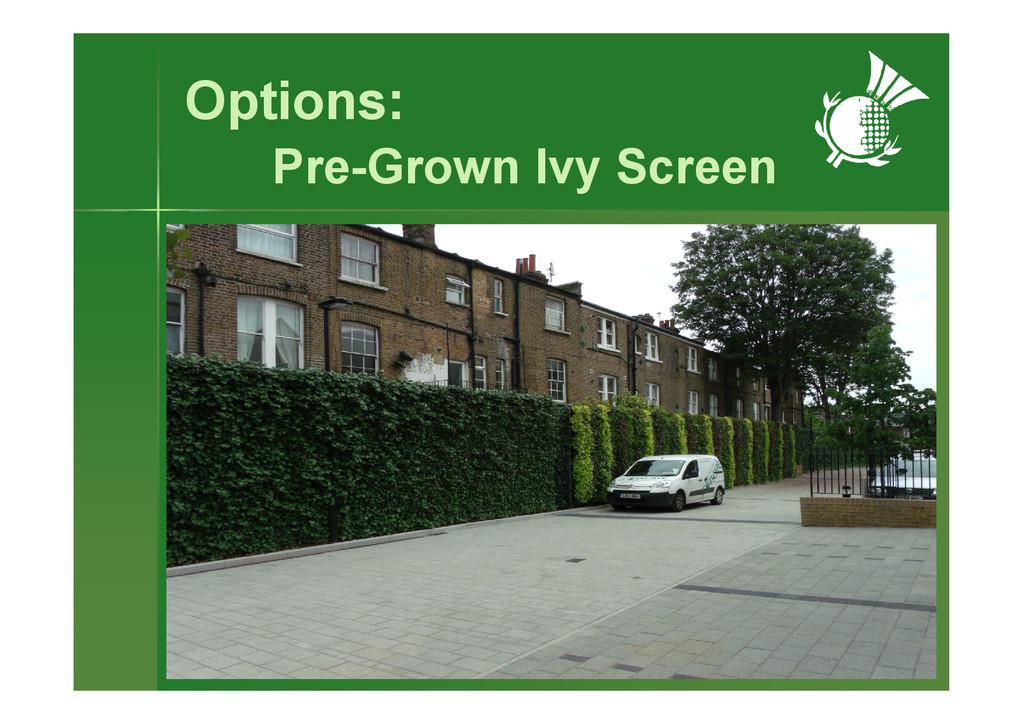 Options: Pre-Grown Ivy Screen