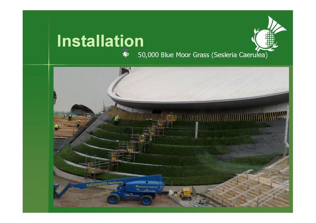Installation 50,000 Blue Moor Grass (Sesleria C...