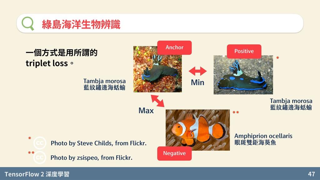 TensorFlow 2 度學習 47 綠島海洋生物辨識 Photo by Steve Chi...