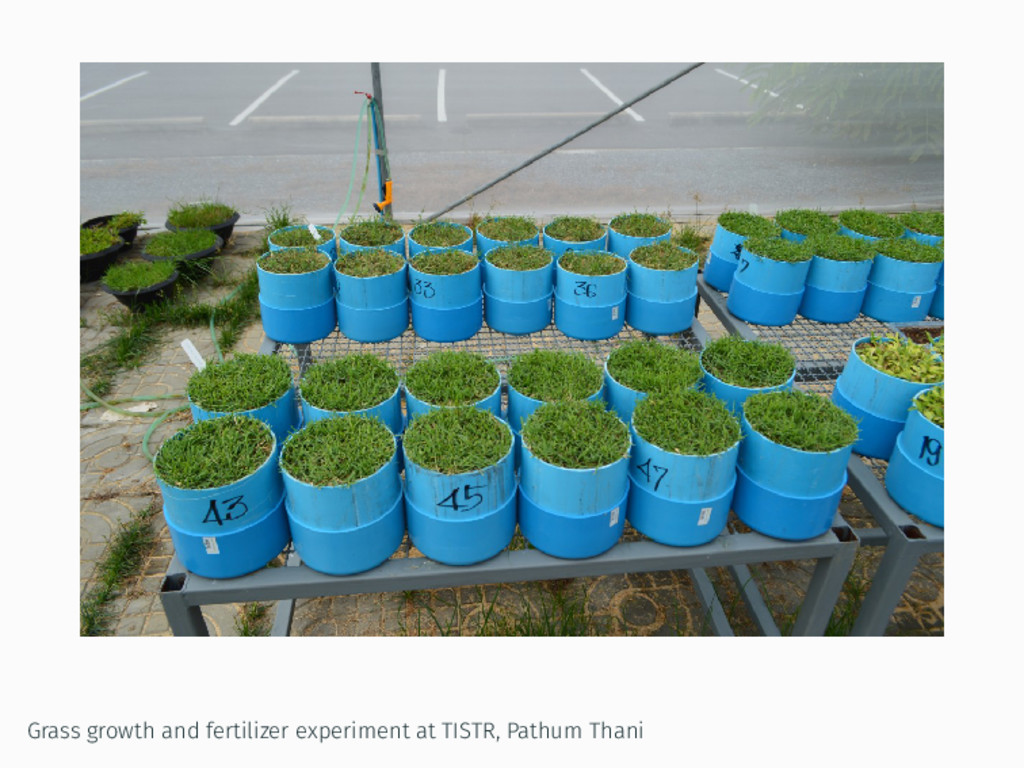 Grass growth and fertilizer experiment at TISTR...