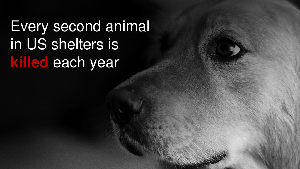 Every second animal in US shelters is killed ea...