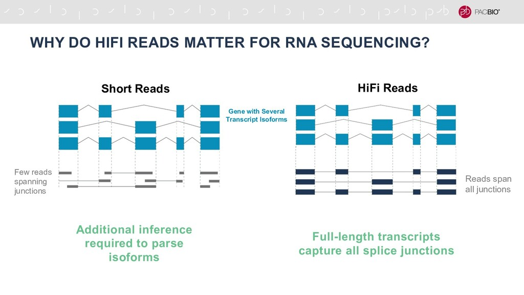 WHY DO HIFI READS MATTER FOR RNA SEQUENCING? Sh...