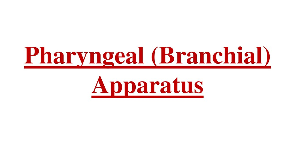 Pharyngeal (Branchial) Apparatus