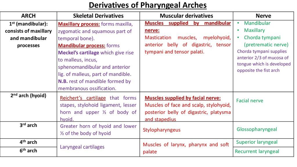 ARCH Skeletal Derivatives Muscular derivatives ...