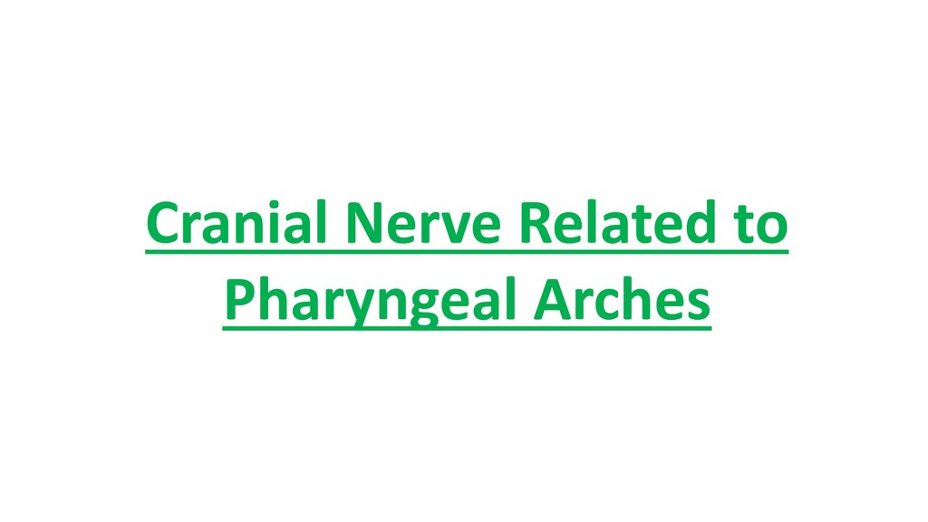 Cranial Nerve Related to Pharyngeal Arches