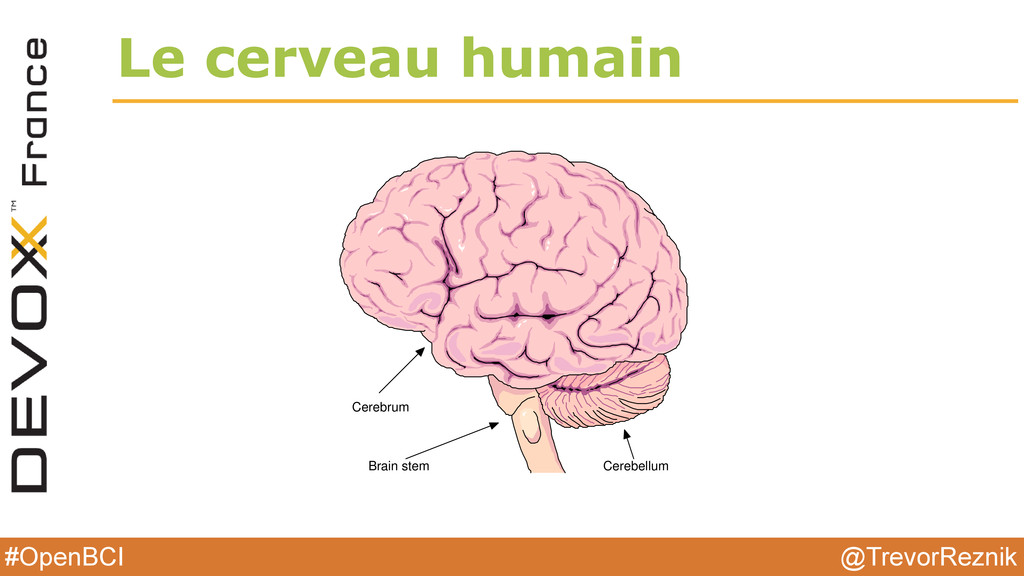 @TrevorReznik #OpenBCI Le cerveau humain 16 CHA...