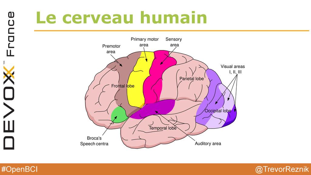 @TrevorReznik #OpenBCI Le cerveau humain 2.3. T...