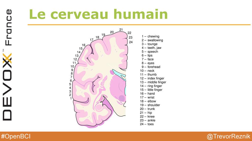 @TrevorReznik #OpenBCI Le cerveau humain 1 2 3 ...