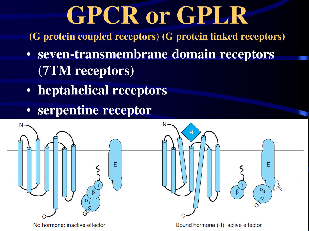 GPCR or GPLR (G protein coupled receptors) (G p...