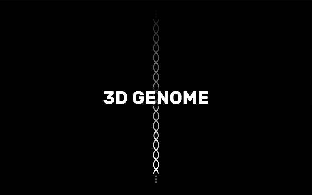 3D GENOME