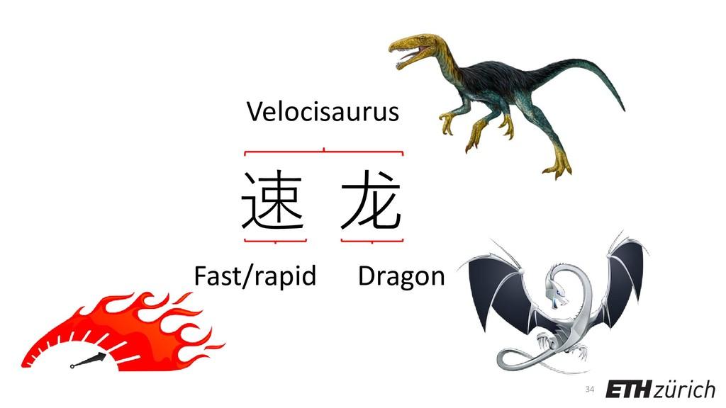 34 速 龙 Velocisaurus Dragon Fast/rapid