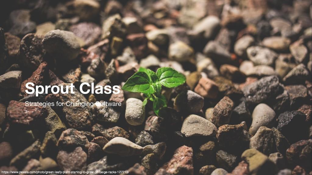 https://www.pexels.com/photo/green-leafy-plant-...