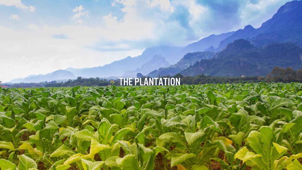 The plantation THE PLANTation