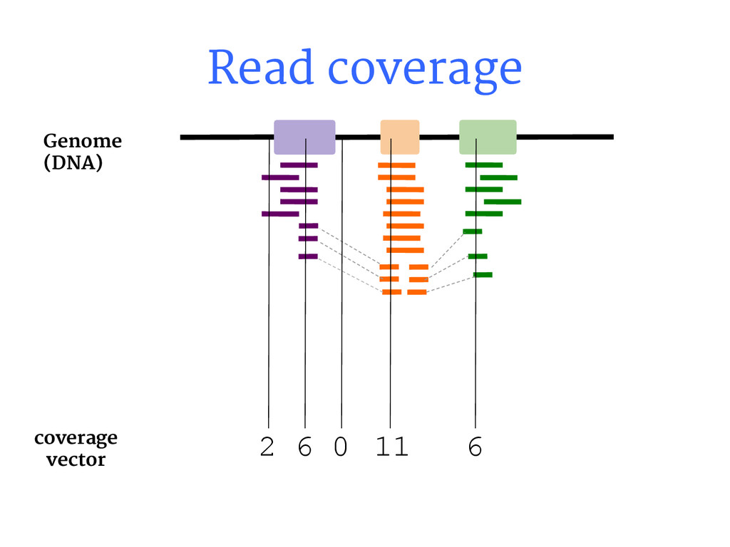 Read coverage coverage vector 2 6 0 11 6 Genome...