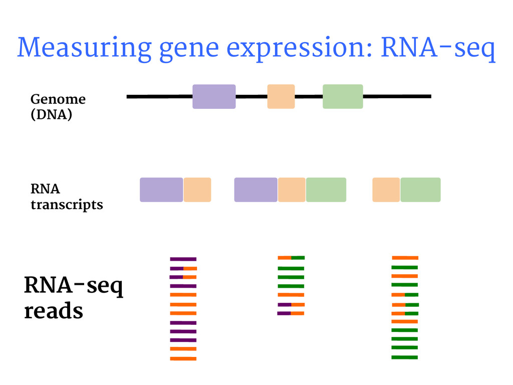 Measuring gene expression: RNA-seq RNA-seq read...