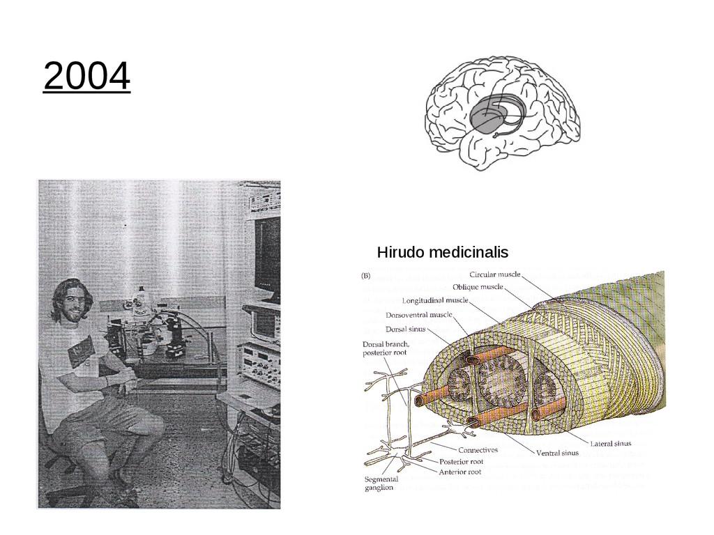 2004 Hirudo medicinalis