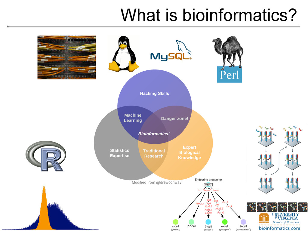What is bioinformatics? Modified from @drewconw...