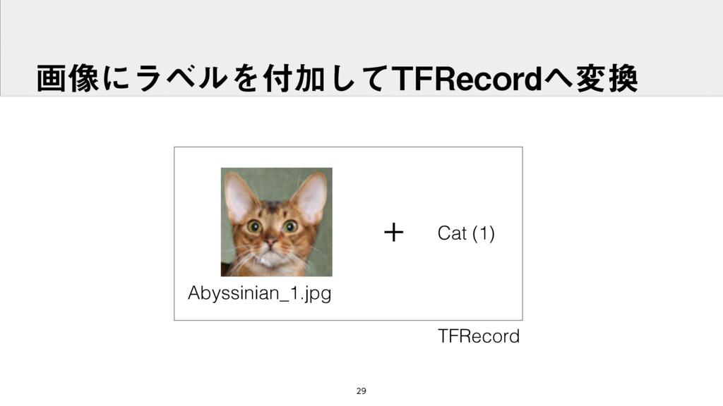 ը૾ʹϥϕϧΛՃͯ͠5'3FDPSEม + Cat (1) Abyssinian_...