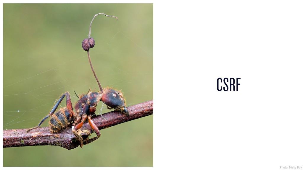 CSRF Photo: Nicky Bay
