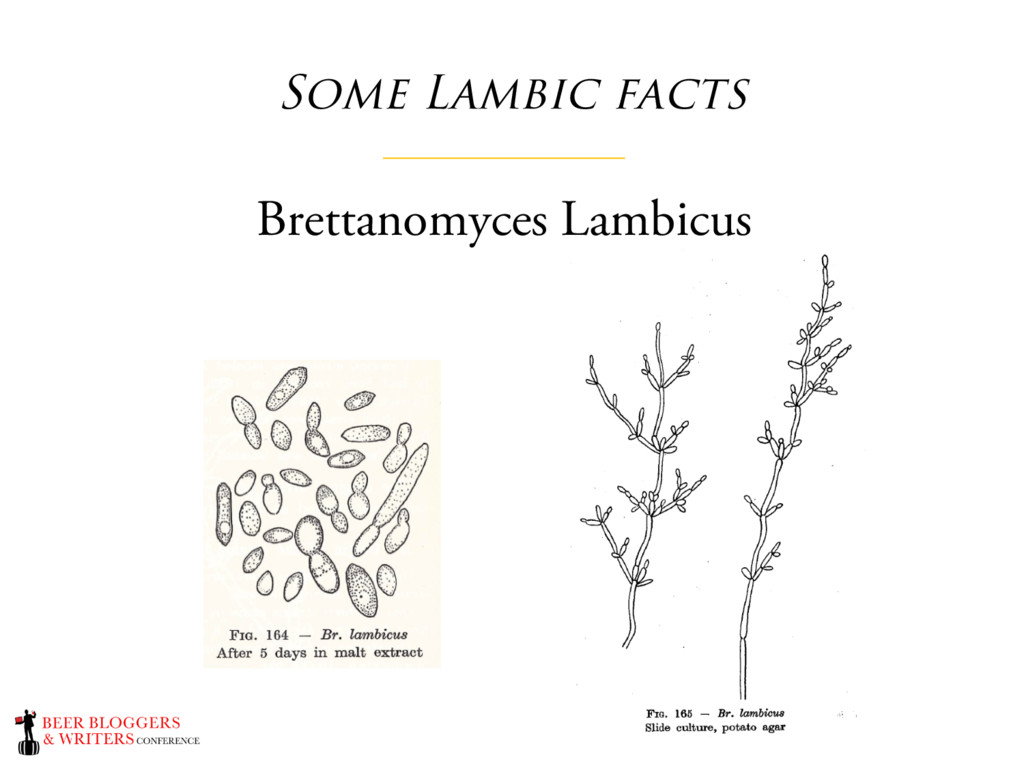 Some Lambic facts Brettanomyces Lambicus