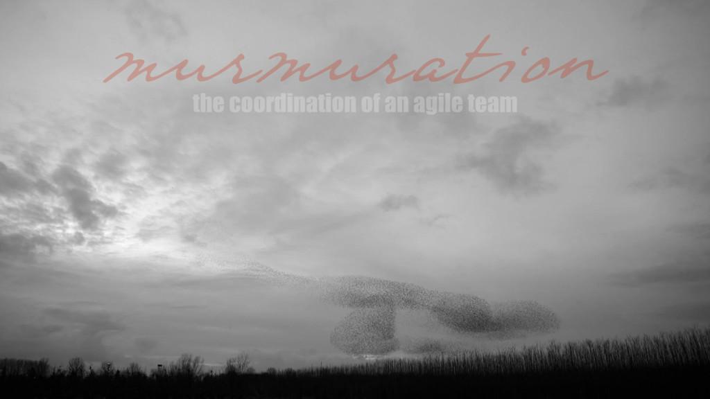 murmuration the coordination of an agile team