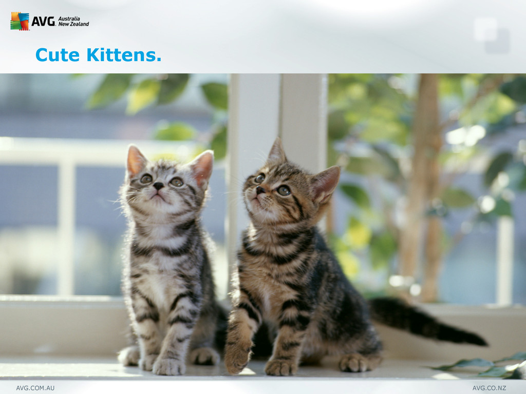 AVG.COM.AU AVG.CO.NZ Cute Kittens.