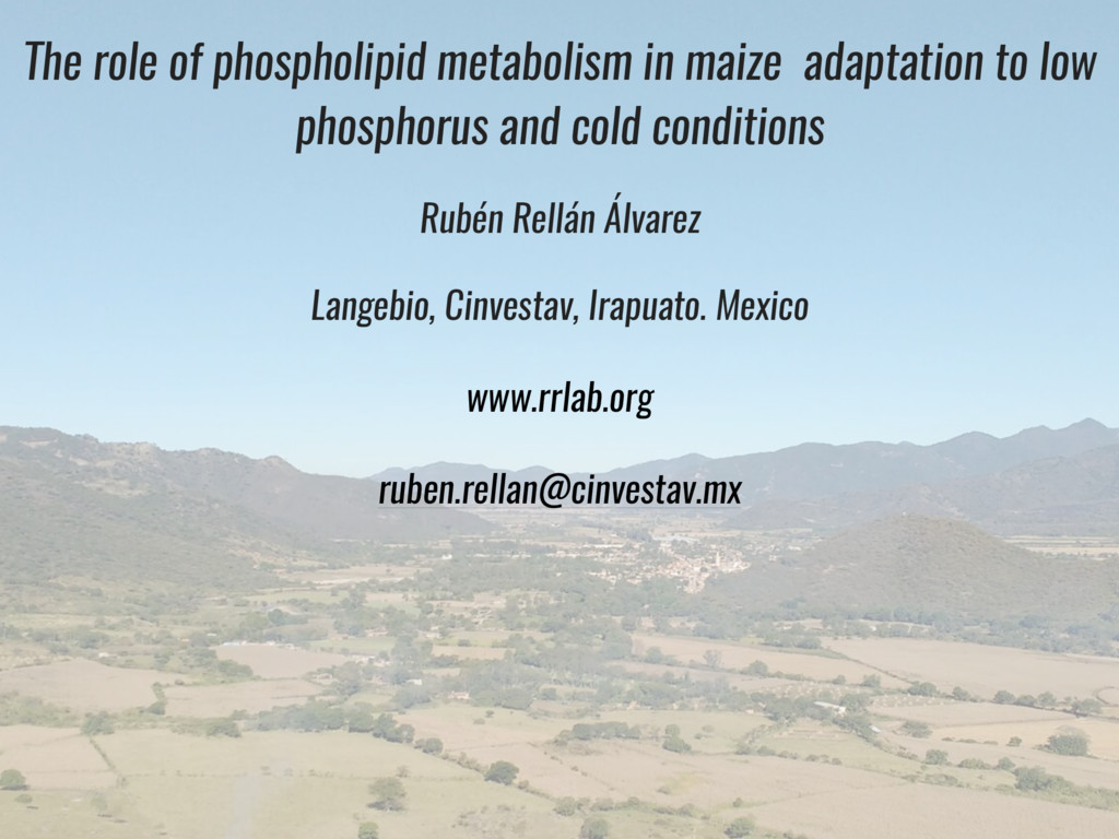 The role of phospholipid metabolism in maize ad...