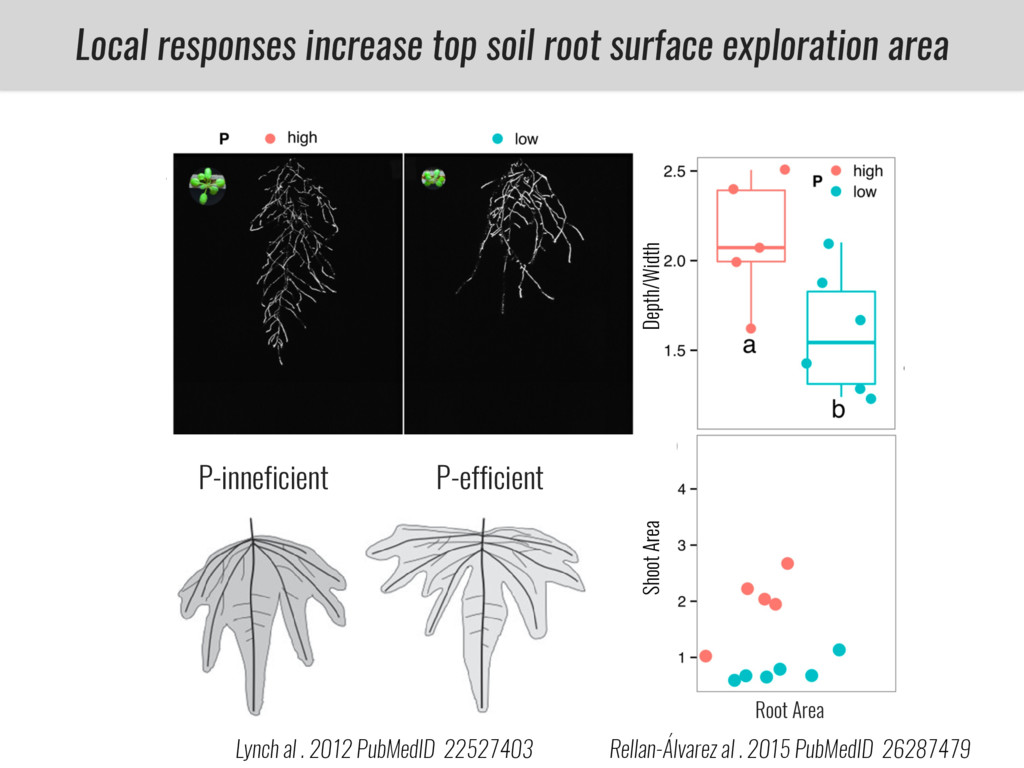 Root Area Local responses increase top soil roo...