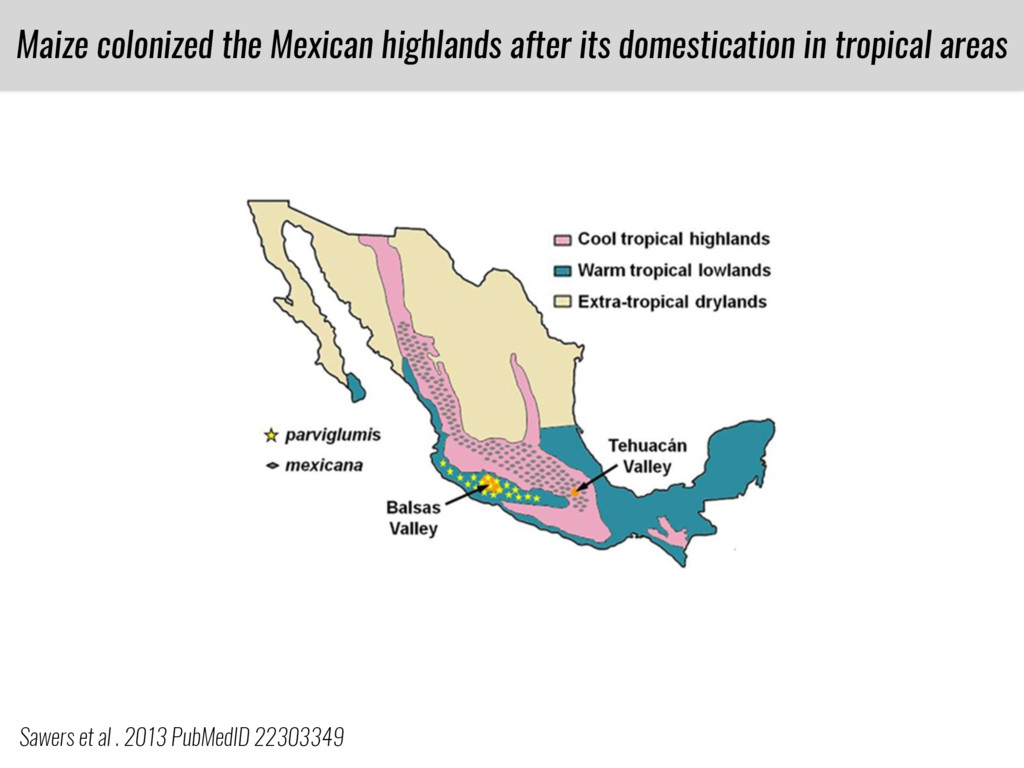 Maize colonized the Mexican highlands after its...