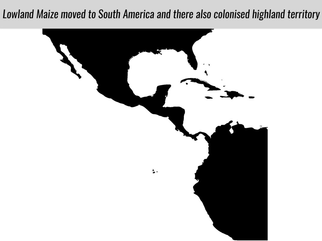 Lowland Maize moved to South America and there ...