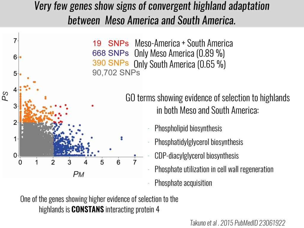 Very few genes show signs of convergent highlan...