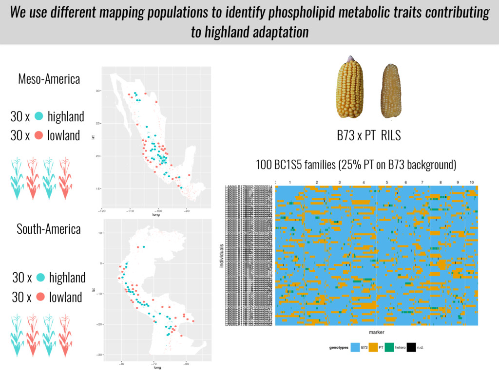 We use different mapping populations to identif...