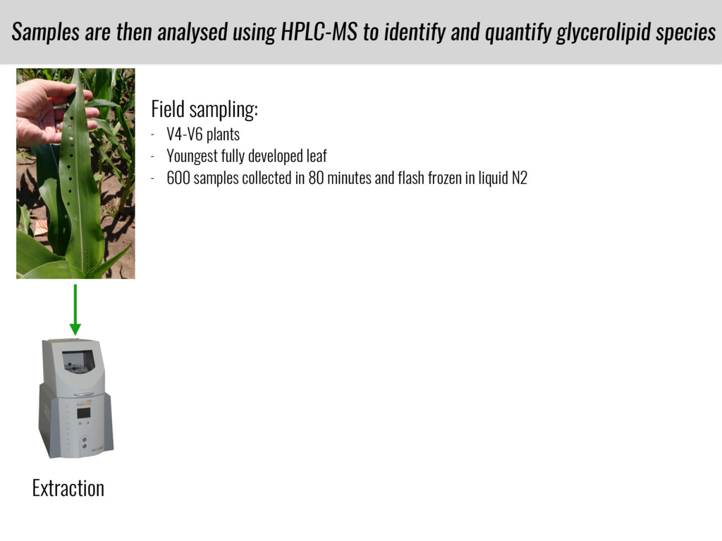 Samples are then analysed using HPLC-MS to iden...