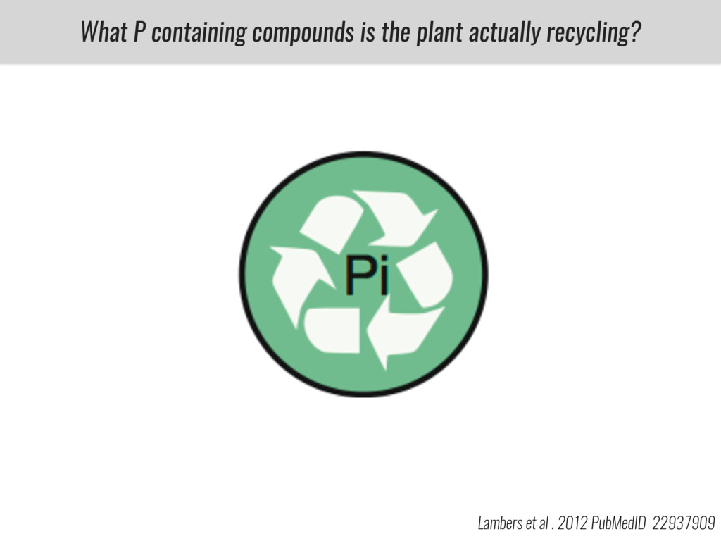 What P containing compounds is the plant actual...