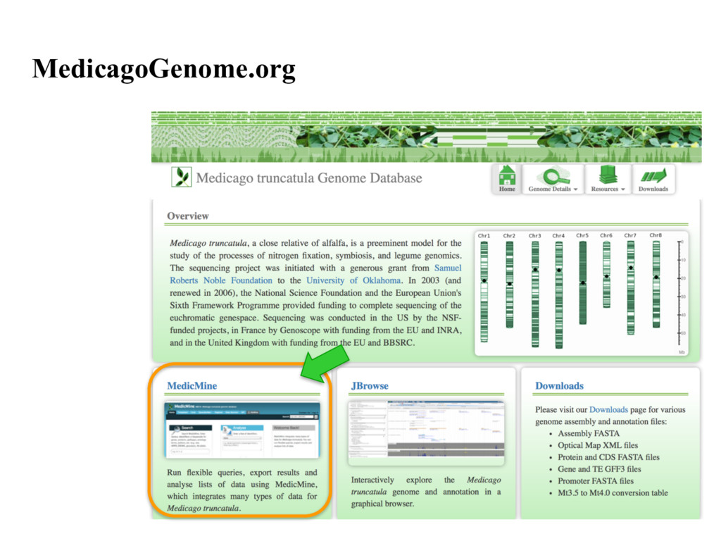 MedicagoGenome.org