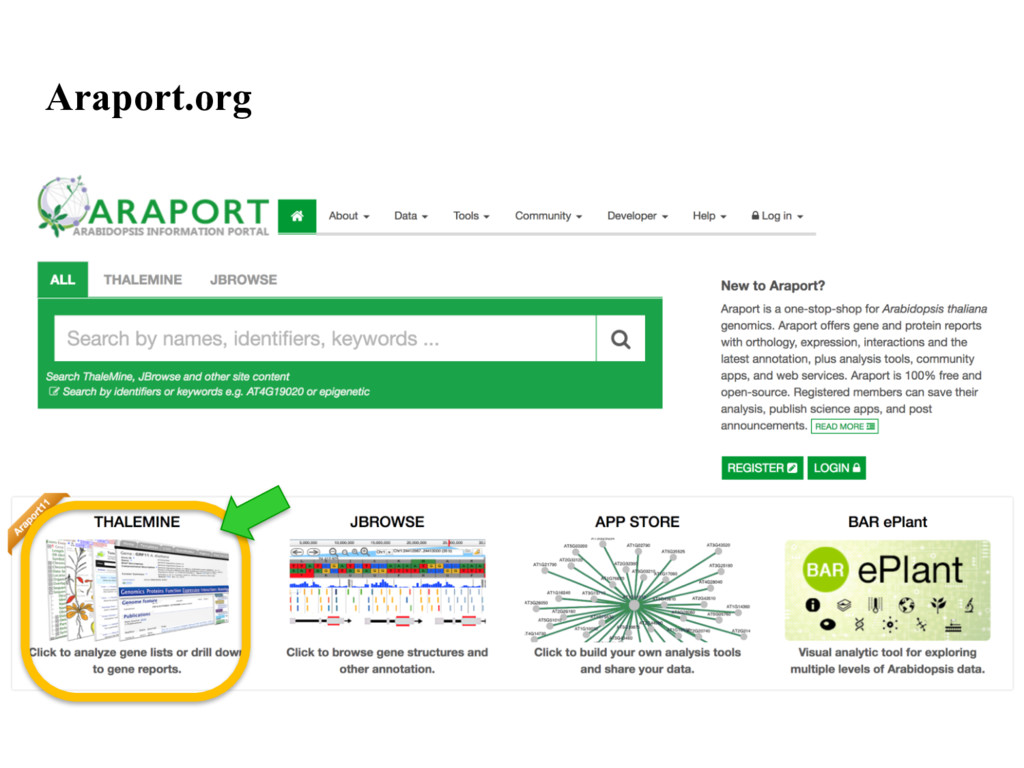 Araport.org