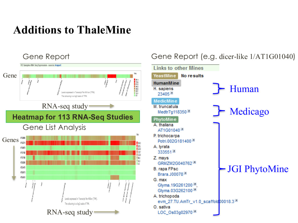 Additions to ThaleMine Heatmap for 113 RNA-Seq ...