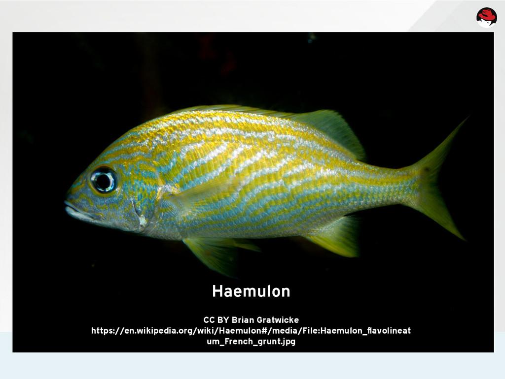 Haemulon CC BY Brian Gratwicke https://en.wikip...