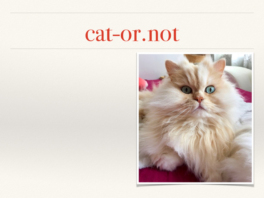 cat-or.not