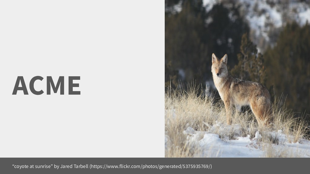 """ACME """"coyote at sunrise"""" by Jared Tarbell (http..."""