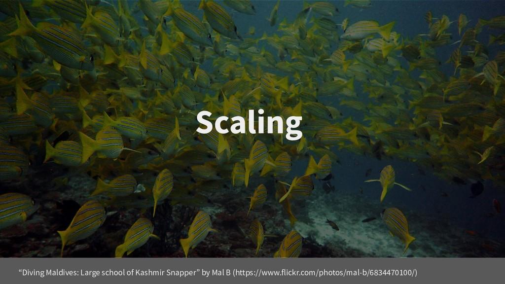 "Scaling ""Diving Maldives: Large school of Kashm..."