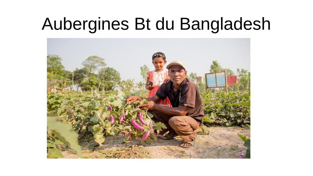 Aubergines Bt du Bangladesh