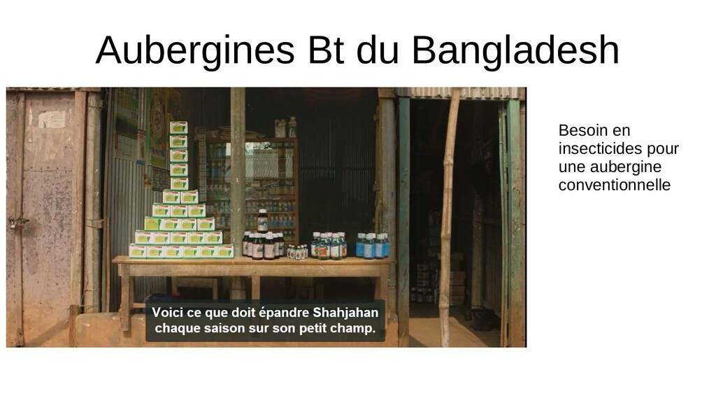 Aubergines Bt du Bangladesh Besoin en insectici...