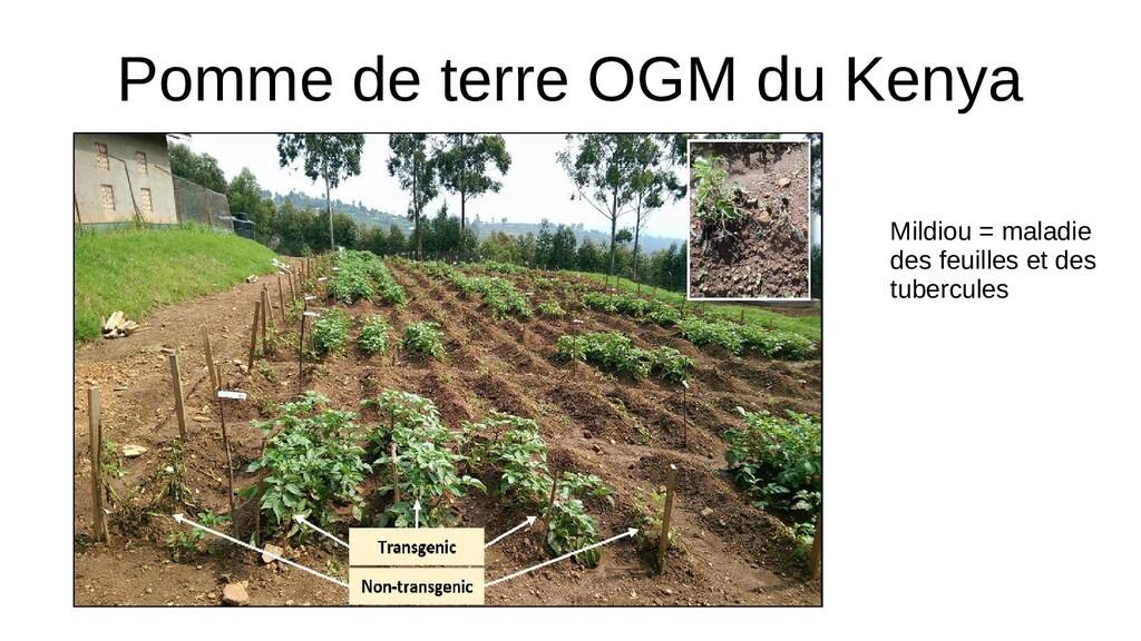 Pomme de terre OGM du Kenya Mildiou = maladie d...
