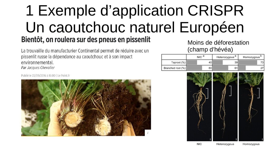 1 Exemple d'application CRISPR Un caoutchouc na...